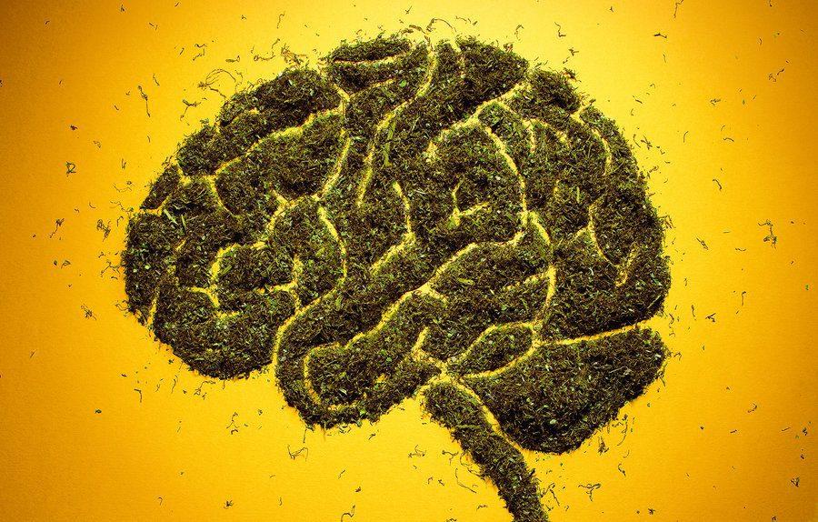 brainandpot_custom-aba10ad5c525a5298e15e31d0ad5aa6a0e228ed7-s900-c85