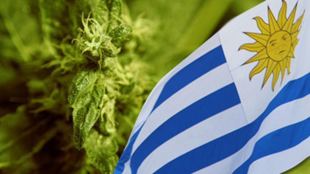 W Urugwaju marihuana