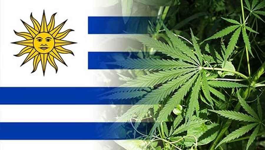 W Urugwaju ruszyła sprzedaż