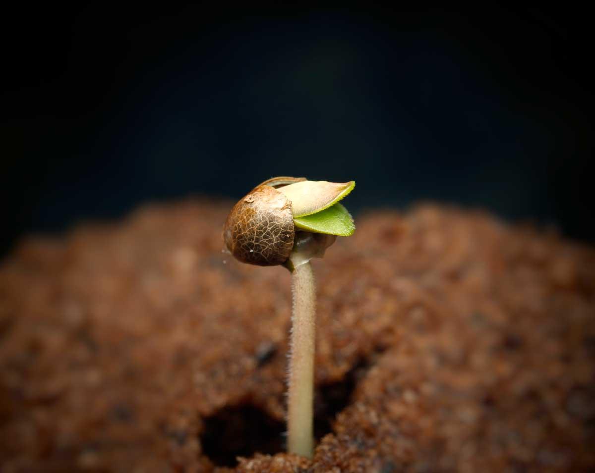 Czego potrzebują nasiona