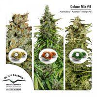 Colour Mix 6 (Autofem)