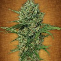 Northern Express Auto