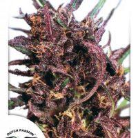 Purple 1#