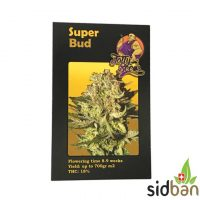 Super Bud Fatty Seeds