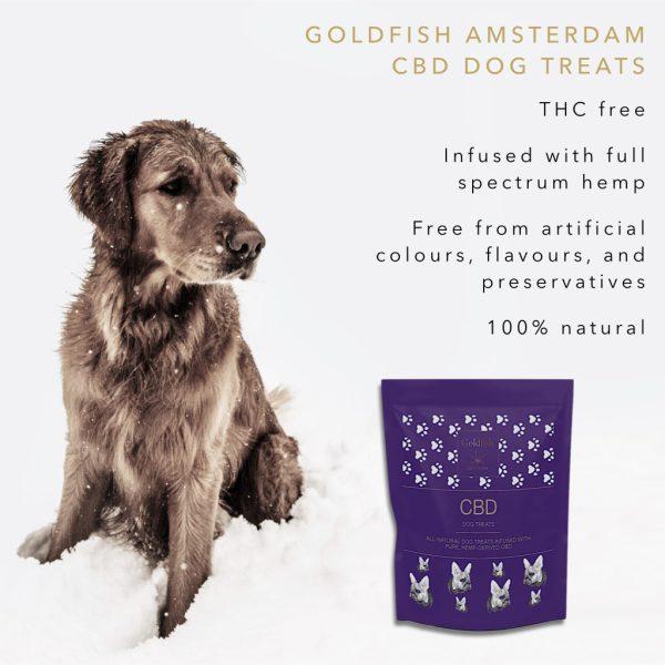 Suplement CBD dla zwierząt Goldfish Amsterdam