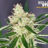 Belle Star (The Outlaw Seeds)