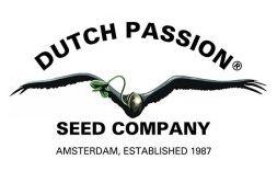 dutch passion feminiowane nasiona marihuany