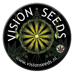 vision seeds nasionka feminizowane marihuany konopi automatyczne