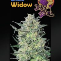 Big Blue Widow