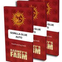 Gorilla Glue Auto (Barney's Farm)