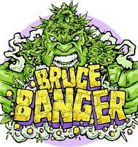 Bruce Banger Fast