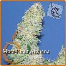 Afghan Mota Khan