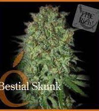 Bestial Skunk