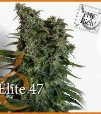 Élite 47